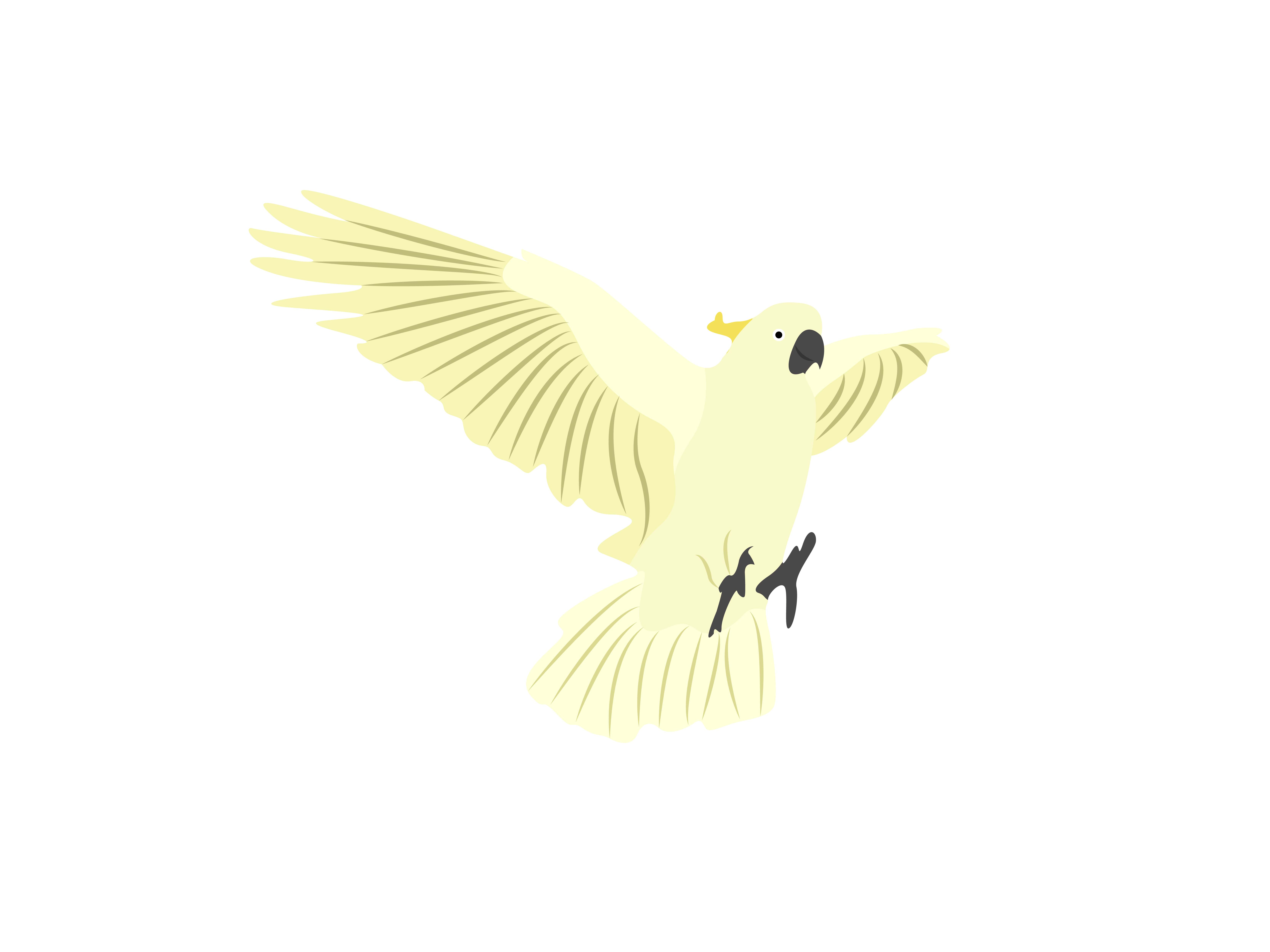 Download Free Cacatuidae Flaying Bird Animal Graphic By Archshape Creative for Cricut Explore, Silhouette and other cutting machines.