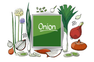 Print on Demand: Vector Set of Onion  Graphic Objects By kazakova_o