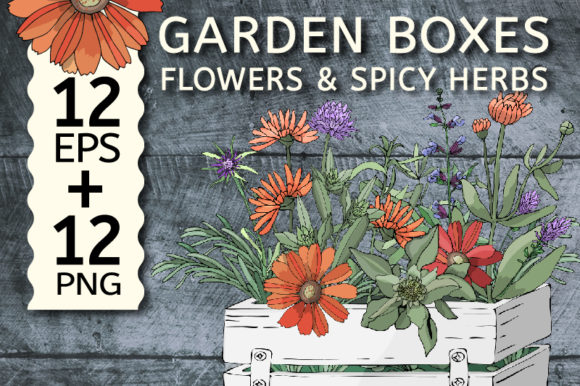 Garden Boxes with Flowers and Herbs  Graphic Illustrations By kazakova_o