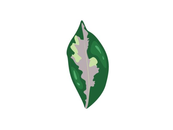 Download Free Graptophyllum Pictum Leaf Graphic By Purplebubble Creative Fabrica SVG Cut Files