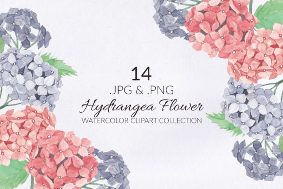 Print on Demand: 14 Hydrangea Flower Watercolor Set Graphic Illustrations By elsabenaa