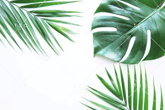 Download Free Tropical Leaves Stock Photo Graphic By Thesundaychic Creative for Cricut Explore, Silhouette and other cutting machines.