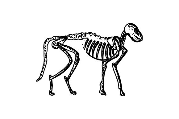 Cat Skeleton Halloween Craft Cut File By Creative Fabrica Crafts - Image 1