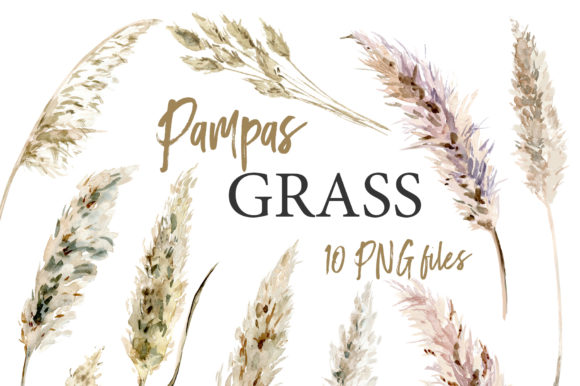 Pampas Grass Watercolor Boho Clipart Graphic Illustrations By lena-dorosh