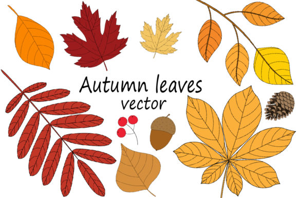 Autumn Leaves Vector Illustration Graphic Illustrations By shishkovaiv