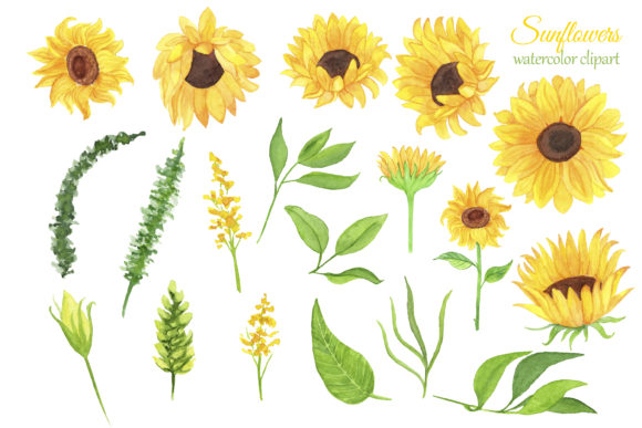 Print on Demand: Sunflowers Watercolor Clipart Graphic Illustrations By s.yanyeva - Image 5