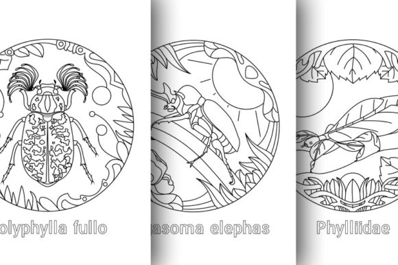Coloring Book 10 Beetles Animals in One Graphic Coloring Pages & Books By DesignsBer