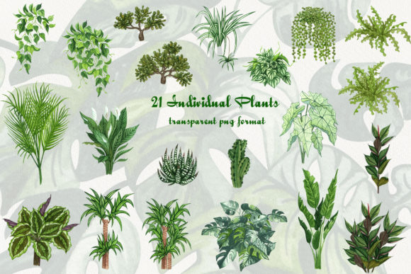 House Plants Watercolor Clip Art Graphic Illustrations By BarvArt - Image 5