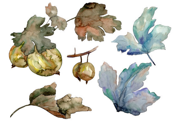 Print on Demand: Gooseberry Plant Ordinary Watercolor Graphic Illustrations By MyStocks