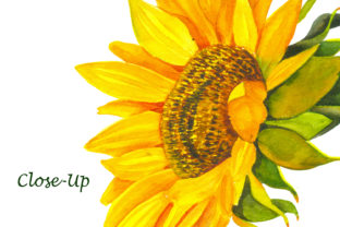 Print on Demand: Sunflower - a Flower of the Sun! Watercor Graphic Illustrations By ElenaZlataArt 5