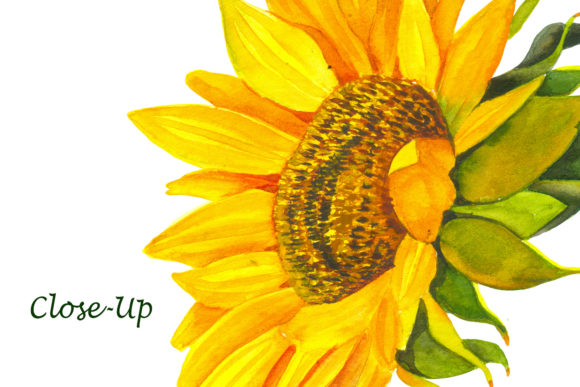 Sunflower - a Flower of the Sun! Watercor Graphic Illustrations By ElenaZlataArt - Image 5