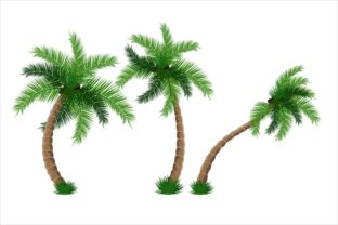 Print on Demand: Beautiful Coconut Tree Graphic Illustrations By edywiyonopp