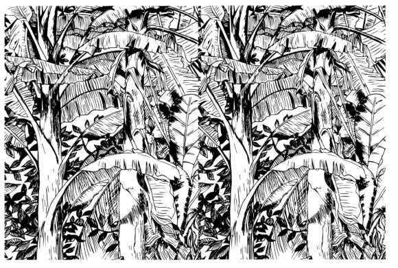 Print on Demand: Tropical Banana Sketch Graphic Illustrations By nnuilyy