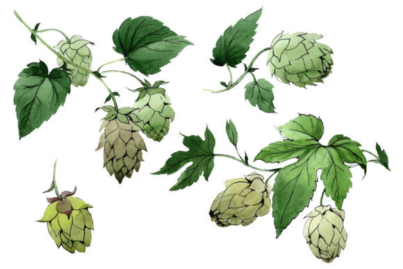 Print on Demand: Green Watercolor Hops Set Graphic Illustrations By MyStocks