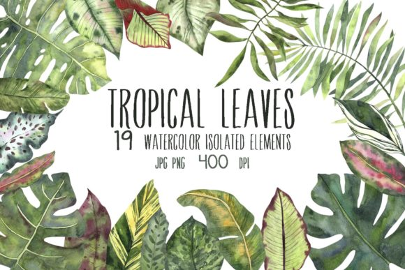 Print on Demand: Tropical Leaves Graphic Illustrations By VashaRisovasha