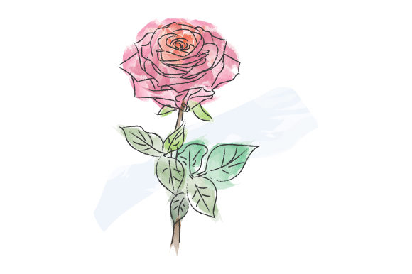 Print on Demand: Watercolor Rose Design Illustration Graphic Illustrations By curutdesign