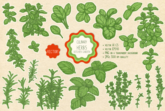 Print on Demand: Culinary Herbs Graphic Illustrations By Snowstorm's Box
