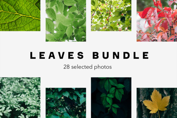 Print on Demand: Leaves Bundle, 28 Photos Graphic Nature By frostroomhead