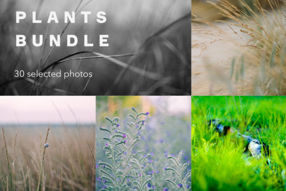Print on Demand: Plants Bundle, 30 Photos Graphic Nature By frostroomhead
