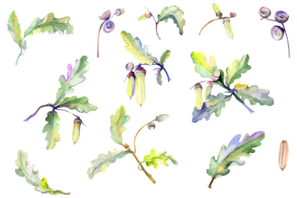 Print on Demand: Acorn Watercolor Graphic Illustrations By MyStocks - Image 1