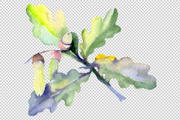 Print on Demand: Acorn Watercolor Graphic Illustrations By MyStocks - Image 11