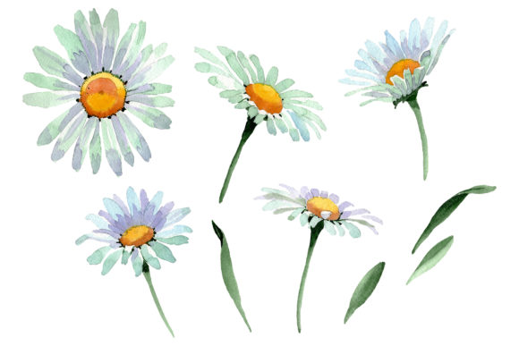 Print on Demand: Big White Chamomile Watercolor PNG Graphic Illustrations By MyStocks