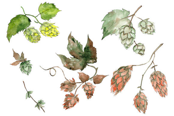 Print on Demand: Hops Plant Watercolor PNG Graphic Illustrations By MyStocks