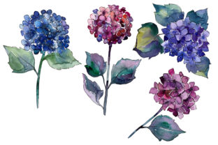 Print on Demand: Hydrangea Purple and Blue Watercolor Set Graphic Illustrations By MyStocks