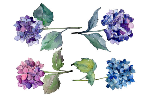 Print on Demand: Hydrangeas Flowers Watercolor Set Graphic Illustrations By MyStocks