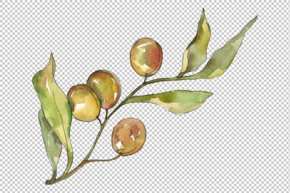 Print on Demand: Olives Watercolor Graphic Illustrations By MyStocks