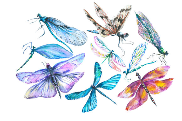 Print on Demand: Original Dragonfly Blue Watercolor Graphic Illustrations By MyStocks