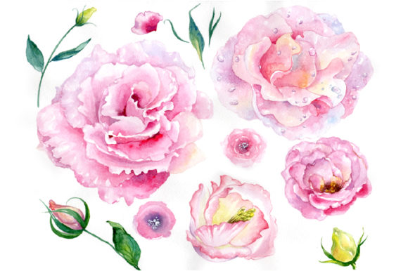 Print on Demand: Pink Watercolor Rose Flower PNG Graphic Illustrations By MyStocks