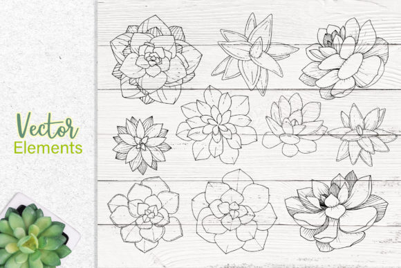 Print on Demand: Succulents Vector Set Graphic Illustrations By MyStocks - Image 7