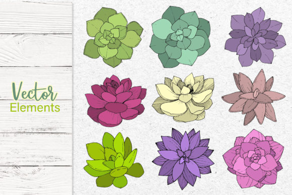 Print on Demand: Succulents Vector Set Graphic Illustrations By MyStocks - Image 8