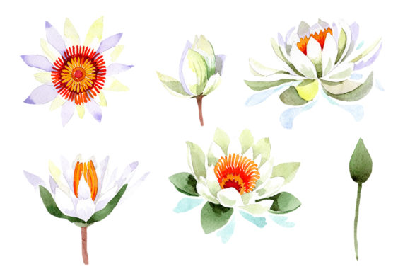 Print on Demand: White Lotus Flower Watercolor Graphic Illustrations By MyStocks
