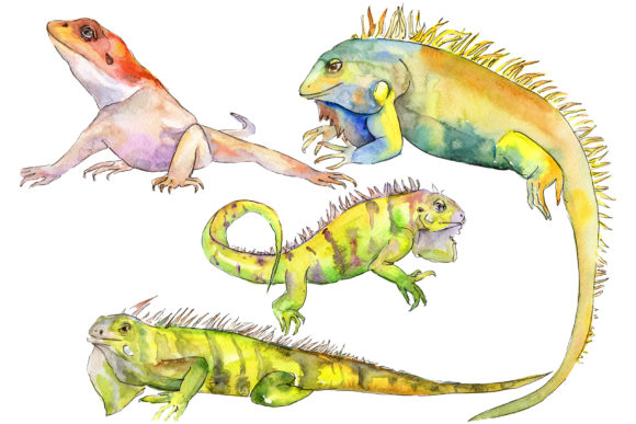 Print on Demand: Animal Iguaana Watercolor Graphic Illustrations By MyStocks