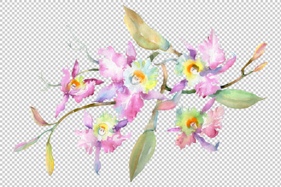 Print on Demand: Branch of Pink Orchids Watercolor Png Graphic Illustrations By MyStocks