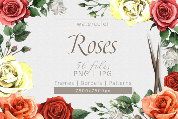 Print on Demand: Colorful Roses PNG Watercolor Set Graphic Illustrations By MyStocks