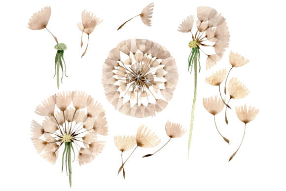 Print on Demand: Dandelion Watercolor Graphic Illustrations By MyStocks
