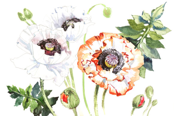 Print on Demand: Field Poppies Watercolor Flower Set Graphic Illustrations By MyStocks
