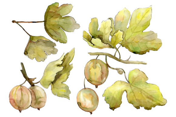 Print on Demand: Gooseberry Watercolor Graphic Illustrations By MyStocks