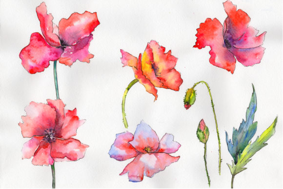 Print on Demand: Light Red Poppy Watercolor Flower Set Graphic Illustrations By MyStocks