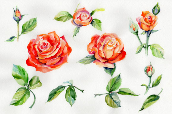 Print on Demand: Light Red Rose Watercolor Flower Set Graphic Illustrations By MyStocks