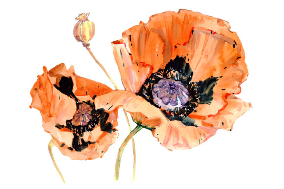 Print on Demand: Original Poppy Red Watercolor Graphic Illustrations By MyStocks