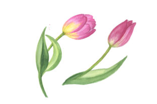 Print on Demand: Pink Tulip Watercolor Design Set Graphic Illustrations By MyStocks