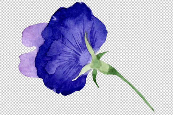 Print on Demand: Purple Sweet Pea Flower Watercolor Graphic Illustrations By MyStocks - Image 3