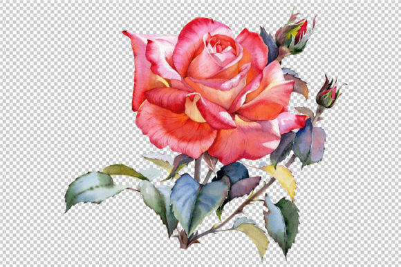 Print on Demand: Red Rose Realistic PNG Watercolor Set Gráfico Ilustraciones Por MyStocks