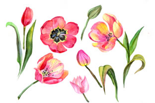 Print on Demand: Red Tulip Watercolor Flower Set Graphic Illustrations By MyStocks