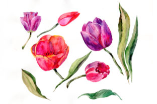 Print on Demand: Red and Purple Tulip Flowers Watercolor Graphic Illustrations By MyStocks
