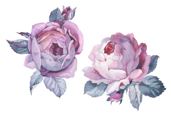 Print on Demand: Two Pink Roses Watercolor Set Graphic Illustrations By MyStocks